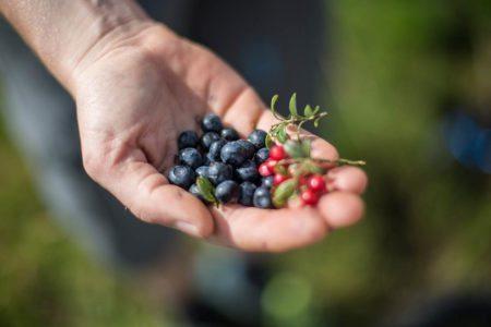 Beeren auf der Bewirtschaftete Tofereralm in Bad Hofgastein